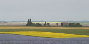 Crop waves, Prairies